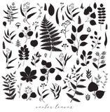 Big set of branches and leaves, fall, spring, summer. Vintage vector botanical illustration, floral elements in black design royalty free illustration