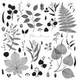 Big set of branches and leaves, fall, spring, summer. Vintage vector botanical illustration, floral elements in black design. Big set of branches and leaves stock illustration