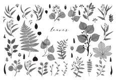Big set of branches and leaves, fall, spring, summer. Vintage vector botanical illustration, floral elements in black design stock illustration