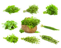 Big Set of Bunches and Basket  of fresh Spice Herbs /  isolated Royalty Free Stock Photos