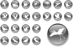 Big set buttons - 2_A. Birds Royalty Free Stock Photography