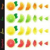 Big set of citrus slices Royalty Free Stock Photo
