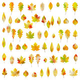 Big set of 60 colorful autumn leaves. EPS 10 vector. Big set of Sixty colorful autumn leaves. And also includes EPS 10 vector Royalty Free Stock Photos