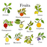 Big set of colorful fruit icons apple, pear, plum, lemon, avocado, persimmon, pomegranate, lime, grapefruit, quince Royalty Free Stock Photography