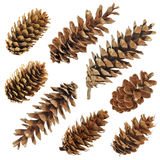 Big set of cones various coniferous trees. Isolated on white Royalty Free Stock Photo