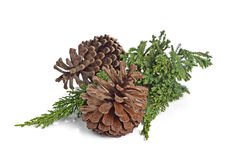 Big set of cones various coniferous trees isolated on white. Stock Photos