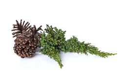 Big set of cones various coniferous trees isolated on white. Background Stock Images