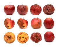 Big set of different rotten apples isolated on white background Royalty Free Stock Image