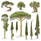 Big set of engraved, hand drawn tree include pine, olive and cypress, fir forest isolated object. Big set of engraved, hand drawn tree include pine, olive and Stock Photography