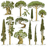 Big set of engraved, hand drawn trees include pine, olive and cypress, fir tree forest  object.  Stock Photography