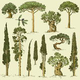 Big set of engraved, hand drawn trees include pine, olive and cypress, fir tree forest  object.  Royalty Free Stock Images