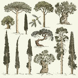 Big set of engraved, hand drawn trees include pine, olive and cypress, fir tree forest  object.  Stock Images