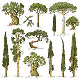 Big set of engraved, hand drawn trees include pine, olive and cypress, fir tree forest  object.  Royalty Free Stock Image
