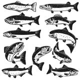Big set of fish illustrations. Pike, salmon, trout, perch. Design elements for fishing logo, label, emblem, sign. Vector illustration Royalty Free Stock Photos