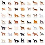 Big set of flat dogicons Stock Photos