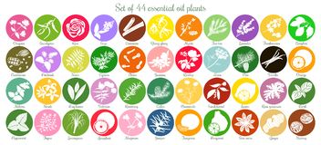 Big set of 44 flat essential oil labels. White Silhouettes. Big icon set of 44 popular essential oil labels. white silhouettes. Ylang-ylang, eucalyptus, jasmine Stock Photography