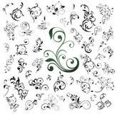 Big set of floral elements Stock Image