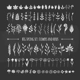 Big set of floral elements on a chalkboard Stock Photography