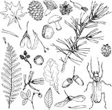 Big set of forest objects Stock Photography