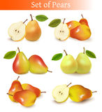 Big set of fresh pears. Royalty Free Stock Image