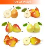 Big set of fresh pears. Royalty Free Stock Image