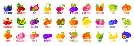 Big set of fruit icons isolated on white background. Colorful tropical fruits leaves lettering. Concept graphic vector element. stock illustration