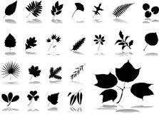Big set icons - 1. Leaves Stock Photography