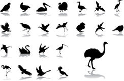 Big set icons - 18. Birds Royalty Free Stock Photo