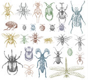 Big set of insects bugs beetles and bees many species in vintage old hand drawn style engraved illustration woodcut Stock Photography