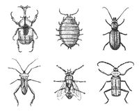 Big set of insects bugs beetles and bees many species in vintage old hand drawn style engraved illustration woodcut. Big set of insects bugs beetles and bees Stock Photo