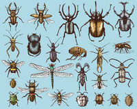 Big set of insects bugs beetles and bees many species in vintage old hand drawn style engraved illustration woodcut Stock Image