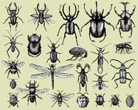 Big set of insects bugs beetles and bees many species in vintage old hand drawn style engraved illustration woodcut Stock Images