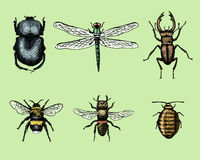 Big set of insects bugs beetles and bees many species in vintage old hand drawn style engraved illustration woodcut Royalty Free Stock Images