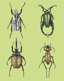 Big set of insects bugs beetles and bees many species in vintage old hand drawn style engraved illustration woodcut. Big set of insects bugs beetles and bees Royalty Free Stock Image