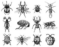 Big set of insects bugs beetles and bees many species in vintage old hand drawn style. Big set of insects bugs beetles and bees, fleas many species in vintage Royalty Free Stock Photography
