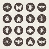 Big set of Insects icon Royalty Free Stock Photo