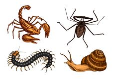 Big set of insects. Vintage Pets in house. Bugs Beetles Scorpion Snail, Whip Spider, Scolopendra. Engraved Vector vector illustration
