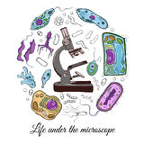 Big set with microscope and different microorganisms Royalty Free Stock Photos