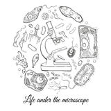 Big set with microscope and different microorganisms Royalty Free Stock Image