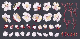 Free Big Set Of Apricot Flowers. Realistic White Vector Flowers, Petals, Buds, Twigs And One Ready-to-use Fruit Tree Branch. Royalty Free Stock Images - 217389669
