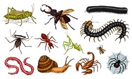 Free Big Set Of Insects. Vintage Pets In House. Bugs Beetles Scorpion Snail, Whip Spider, Worm Centipede Ant Locusts, Mantis Stock Image - 124971631