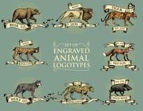 Big Set Of Vintage Emblems, Logos Or Badges With Wild Animals Tiger, Lion King, Bobcat Lynx Leopard And Boar, Bear And