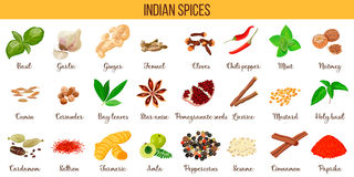 Big  set of popular culinary spices silhouettes. Ginger, chili pepper, garlic, nutmeg, anise etc. Stock Photos