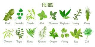 Big set of realistic culinary herbs. sage, thyme, rosemary, basil. Big icon set of popular culinary herbs. realistic style. Basil, coriander, mint, rosemary royalty free illustration