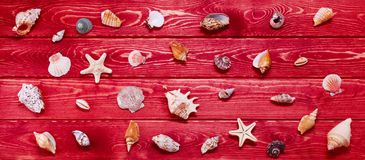 Big Set of Sea Shells Stock Image
