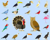 Big set of tropical, domestic and other birds, cardinal, flamingo, owls, eagles, bald, sea, parrot, goose. raven royalty free illustration