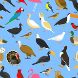 Big set of tropical, domestic and other birds royalty free illustration