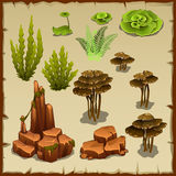 Big set of variety underwater plants and stones. Big set of variety of underwater plants and stones Royalty Free Stock Image