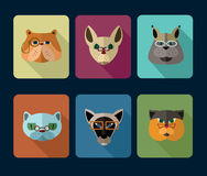 Big set of vector icons of cats. Stock Image