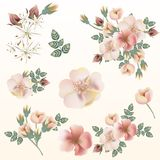 Big set of vector pink pastel wild roses for save the date cards. Invitations, patterns Royalty Free Stock Photo